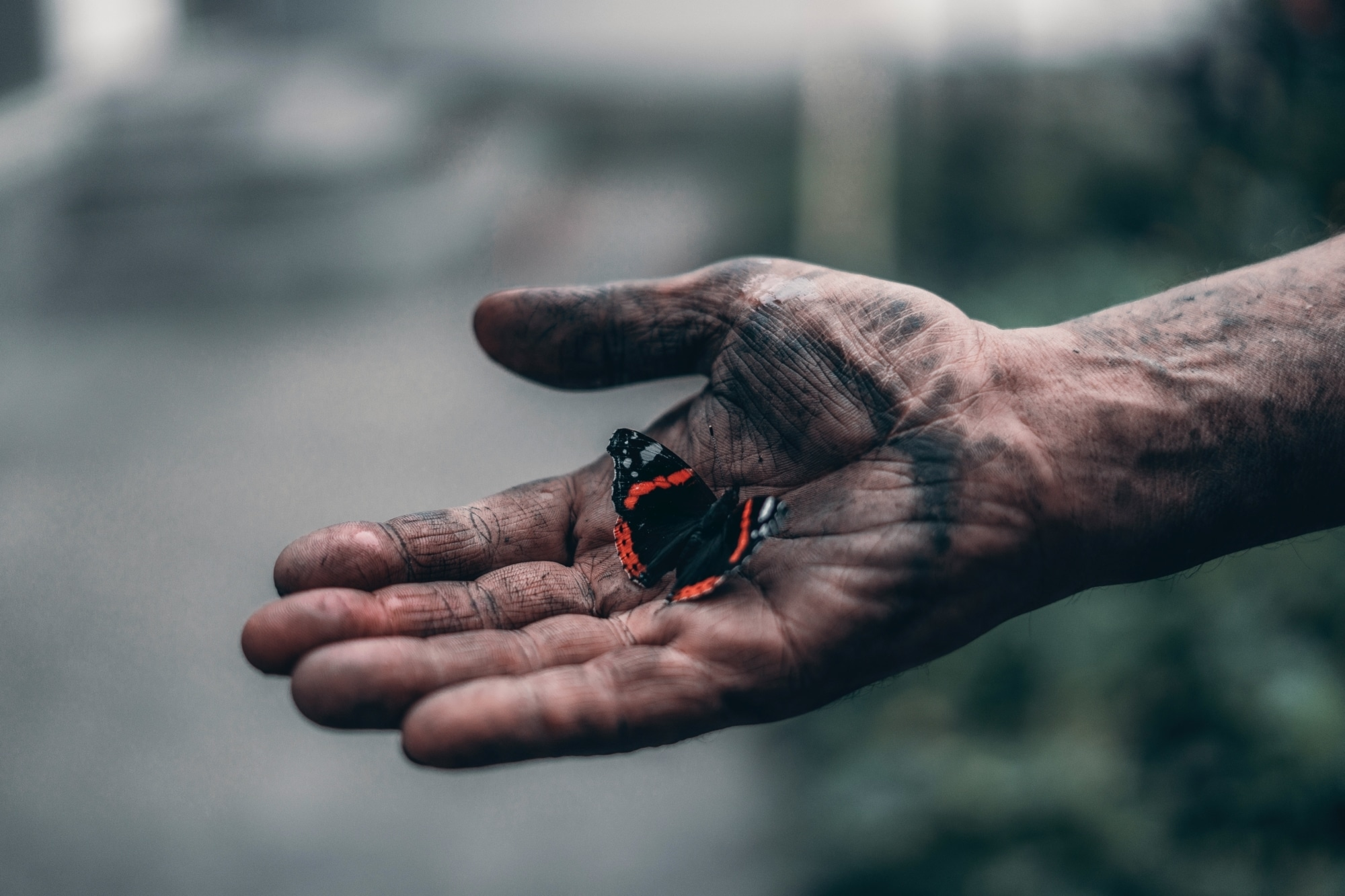 black and red butterfly on person s hand 3979732 | Ewa de Saporta